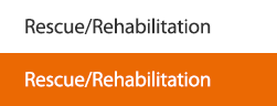 Rescue/Rehabilitation